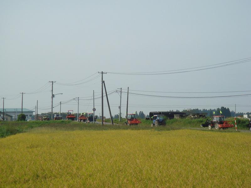 稲刈り間近の田園をパレードしました。